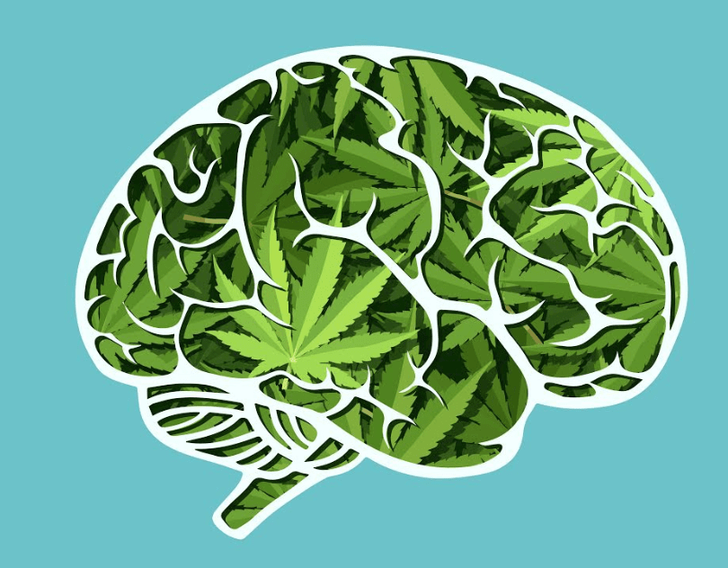 Does Marijuana Really Kill Brain Cells?