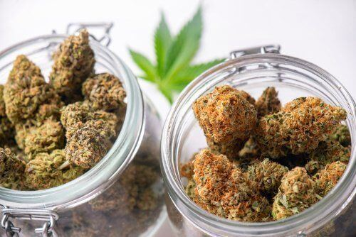 These Strains Will Help Keep You Energized Throughout the Day