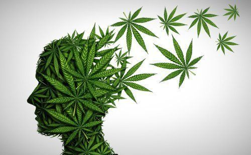 The Effects of CBD on Brain Function
