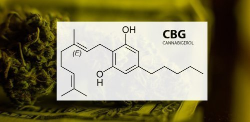 CBG In Cannabis May Reduce Brain Inflammation