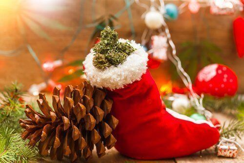 These Pinene Rich Strains are Perfect for the Holiday Season