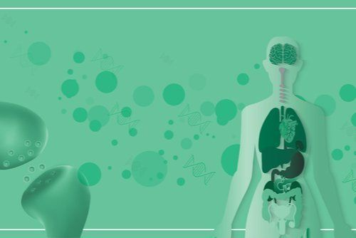 What Are Cannabinoid Receptors & What Do They Do?