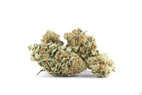Strain Feature: All About Jack Herer