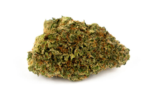 Strain Feature: All About Gorilla Glue #4 (GG4)
