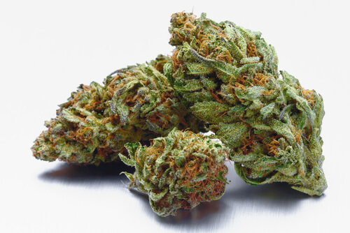 Strain Feature: Velvet Glove Florida Medical Marijuana