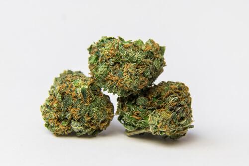 Strain Feature: Zskittlez (Florida Medical Marijuana)